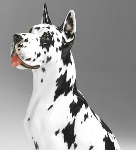 Great Dane black and white