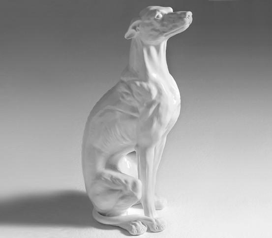 White greyhound