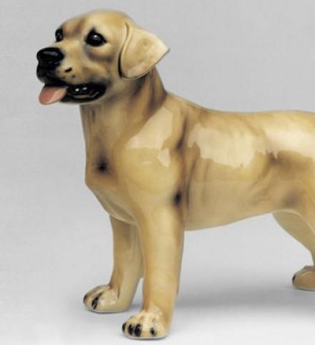 Labrador Retriever de pie
