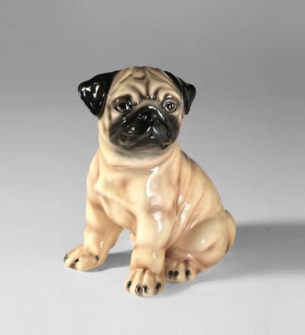 Pug sitting